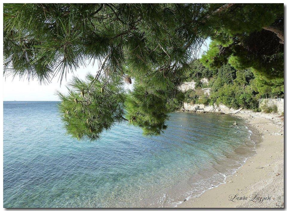 Ginestre: dove andare al mar a Trieste di laura lazzari